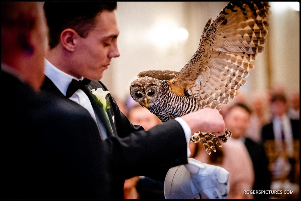 Owl ring bearer at Leeds Castle
